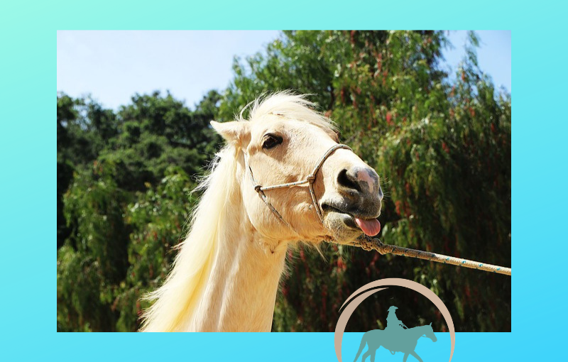 Does your horse sayNO?